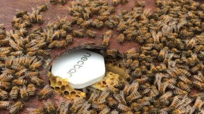 Protecting bees and crops with IoT and AI
